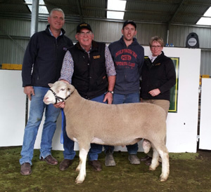 Waratah-Ram-Sale-2016-Lot-8